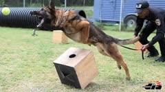 Así es como se entrena un perro policía