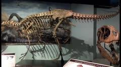 Descubren la capacidad para nadar del Spinosaurus aegyptiacus