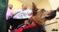 Entregan perros de servicio para personas con impedimentos